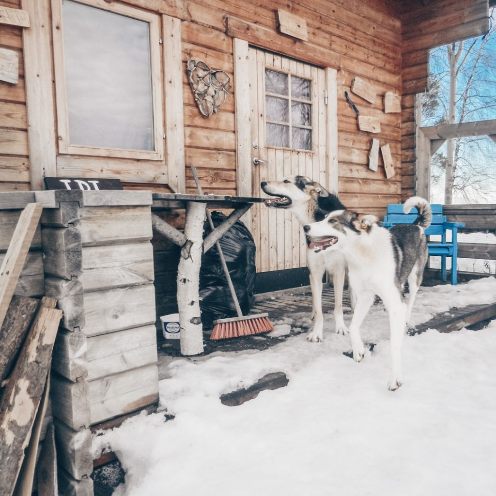 Pearl-opal-in front of cabin